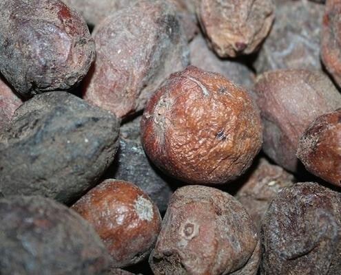 Noix d'argan avec pulpe