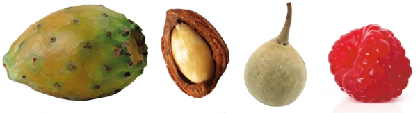 sérum-visage-ayda-huiles-végétales