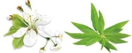 ingrédients huiles essentielles sérum cosmétique ayda