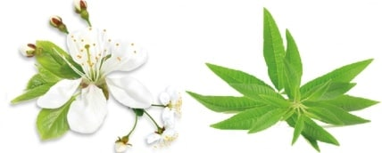 sérum-visage-ayda-huiles-essentielles