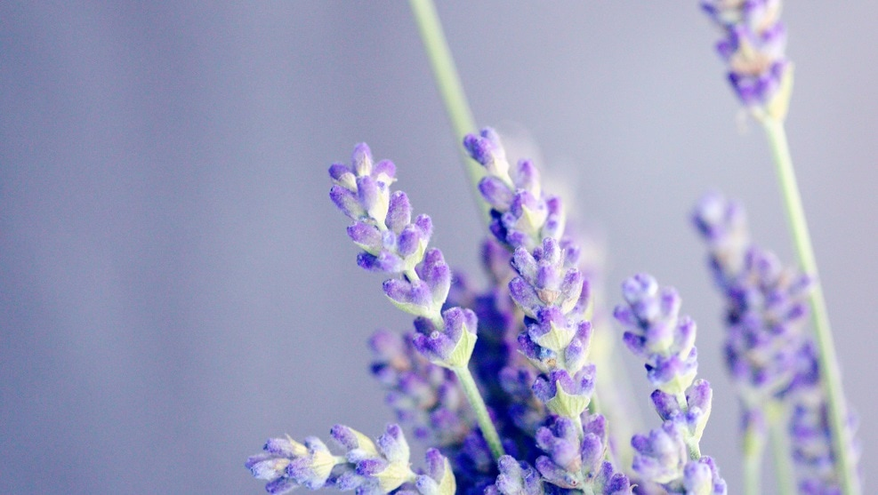 7 huiles essentielles relaxantes et anti-stress